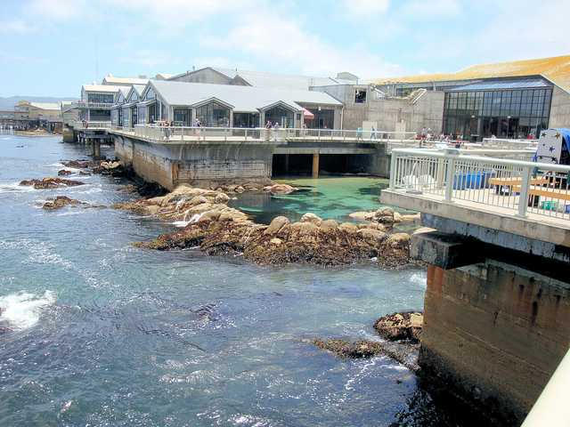 Monterey bay aquarium monterey ca california beaches for Pool show monterey