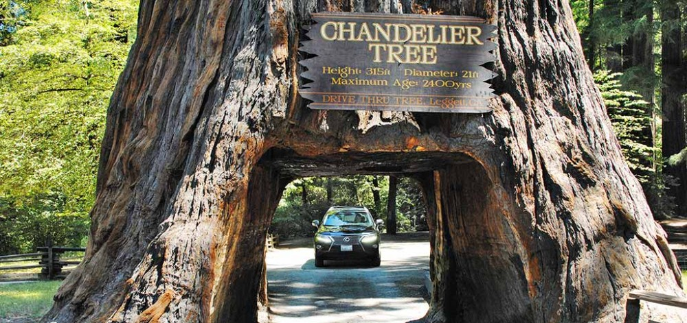 Chandelier Drive Thru Tree Park