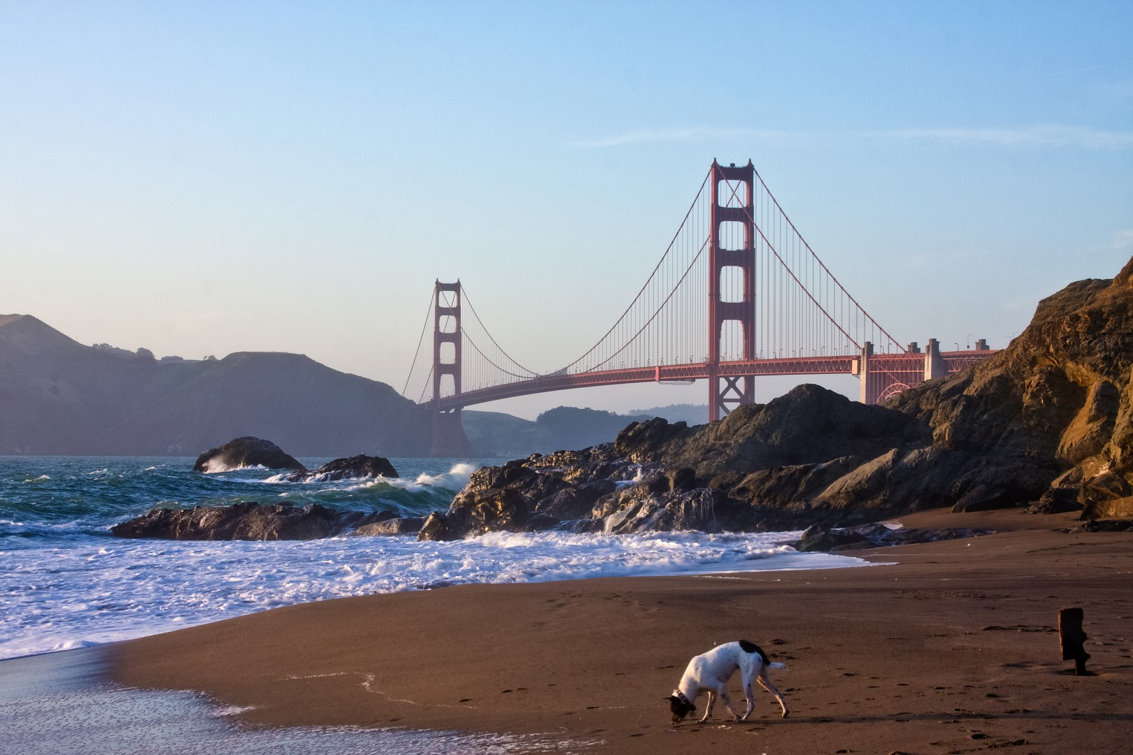 Dog Friendly Beaches San Francisco